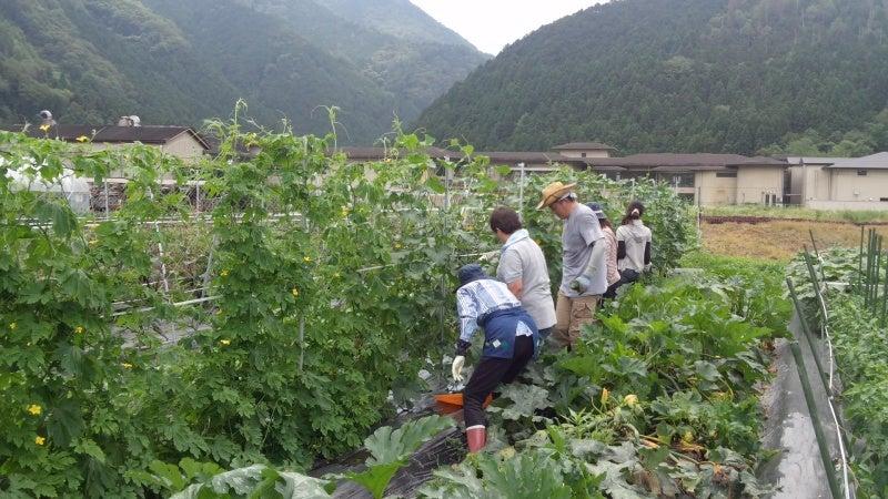 ミニテック★野菜CLUB★-きゅうり収穫