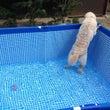 プール開き!!