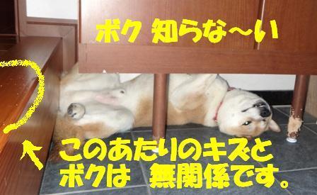 柴犬ジンのブログ-3