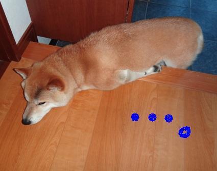 柴犬ジンのブログ-6