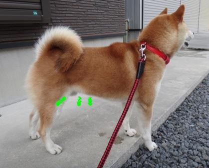 柴犬ジンのブログ-2