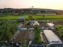 耕作放棄地を剣先スコップで畑に開拓!有機肥料を使い農薬無しで野菜を栽培する週2日の農作業記録 byウッチー-130806ウッチー式・今日の農作業の出来栄え02