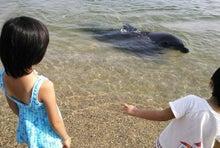 和光市長 松本たけひろ オフィシャルウェブサイト-イルカの人間見学