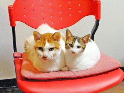 ペットと飼い主さんの為の療法院 クロスフィールド