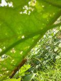 炭素循環農法と自然農法組み合わせてやりたいな~~-DSC_0423.JPG