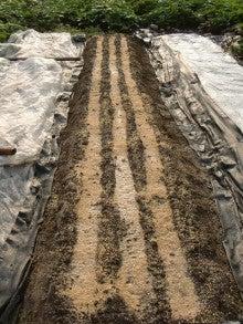 耕作放棄地を剣先スコップで畑に開拓!有機肥料を使い農薬無しで野菜を栽培する週2日の農作業記録 byウッチー-130805にんじんDrカロテンV種蒔き09