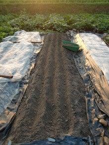 耕作放棄地を剣先スコップで畑に開拓!有機肥料を使い農薬無しで野菜を栽培する週2日の農作業記録 byウッチー-130805にんじんDrカロテンV種蒔き02