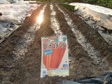 耕作放棄地を剣先スコップで畑に開拓!有機肥料を使い農薬無しで野菜を栽培する週2日の農作業記録 byウッチー-130805にんじんDrカロテンV種蒔き04