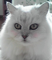 愛猫チロとの思い出日記