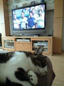 ずれずれブログ…湘南で猫と暮らせば…-130813_1013~0001.jpg