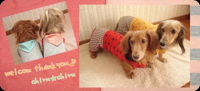 $☆犬服ハンドメイド☆ Mダックスちっち&るるのお洒落な毎日