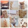 シャープのCMの猫!…