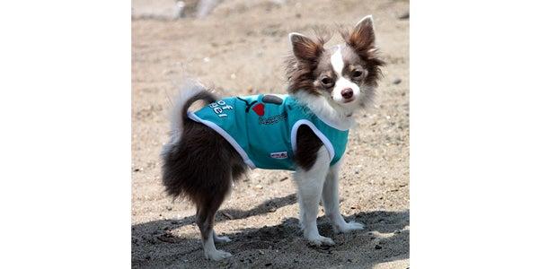 犬服、ダックス服のわんライフのブログ-スマイリータンク2