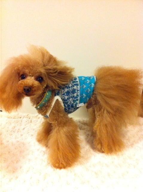 犬服、ダックス服のわんライフのブログ-犬服オーダーメイド