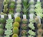 植物と雑貨のinnovation-プラグ苗