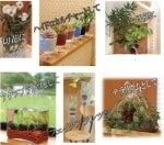 植物と雑貨のinnovation-ネオコール