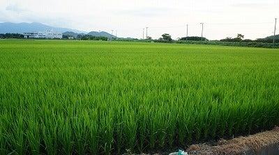 $九州・福岡県糸島から野菜と食材をお届けするmamagocoro(ママゴコロ)のブログ