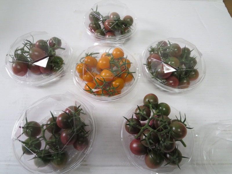 須藤物産デザイナーズトマト