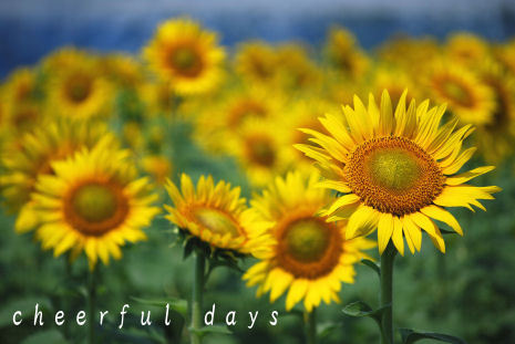 Cheerful days
