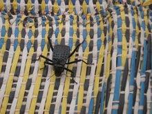 【とうとう】四十路女のありふれた日常-3639_砂漠の虫。
