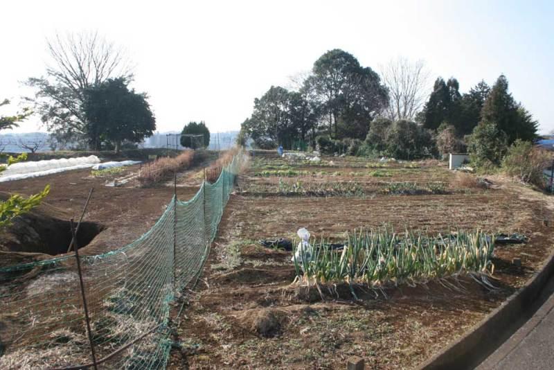 佐江戸城/杉山神社周辺の畑