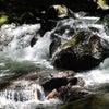 奥入瀬渓流から十和田湖へ♪の画像