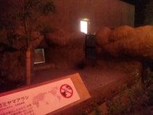 鹿児島お住まい日報-yoru_Zoo2