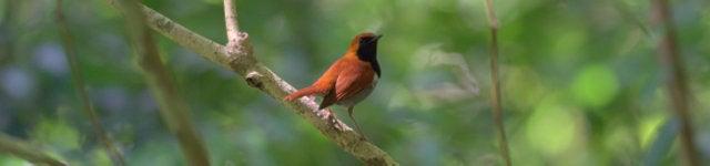 鳥好きFPのブログ