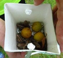 菊水いちい幼稚園のブログ-20130827_05