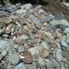 ∵ 王滝の川での画像