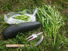 炭素循環農法と自然農法組み合わせてやりたいな~~-DSC_0463.JPG