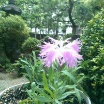 日本女性を象徴する花…