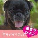 ふがれす九州地区ブログ-ひよこ76-1