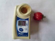 須藤物産トマト屋さんのブログ-須藤物産 高糖度トマト プレシャスハート