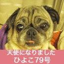 ふがれす九州地区ブログ-ひよこ79-1