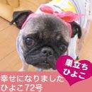 ふがれす九州地区ブログ-ひよこ72-1