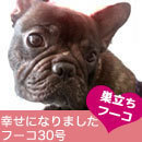 ふがれす九州地区ブログ-フーコ30-1