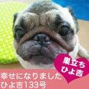 ふがれす九州地区ブログ-ひよきち133-1