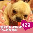 ふがれす九州地区ブログ-フレ吉50-0