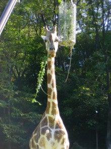 できたてロールケーキのお店 Lump(ルンプ)のブログ-8月 東山動物園