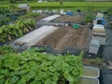 耕作放棄地を剣先スコップで畑に開拓!有機肥料を使い農薬無しで野菜を栽培する週2日の農作業記録 byウッチー-130902ウッチー式・今日の農作業の出来栄え03