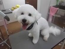 ペット 犬 美容室 トリミング 大阪の わんわんぷらざ 都島店♪