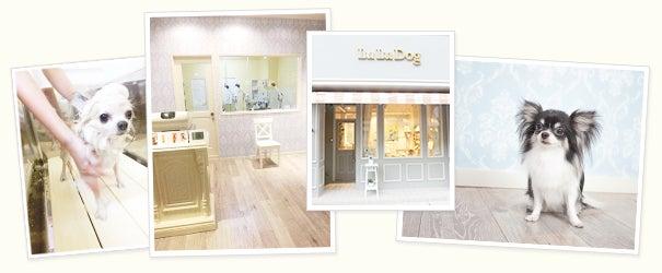 LuLuDog Salon Diary