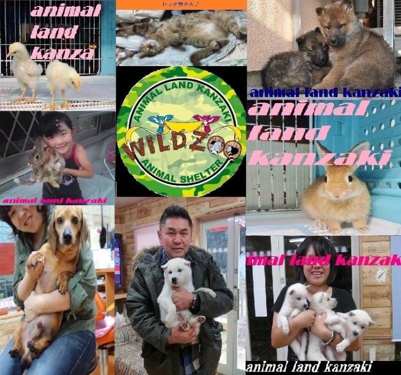 $動物保護施設♪アニマルランド神崎♪動物引き取り!-animal land kanzaki