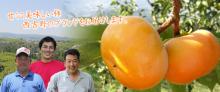 柿自慢.comのブログ
