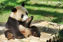 中国大連生活・観光旅行ニュース**-大連 森林動物園 パンダ館