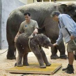 日本動物愛護教会のブログ-サーカスの象