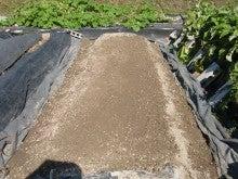 耕作放棄地を剣先スコップで畑に開拓!有機肥料を使い農薬無しで野菜を栽培する週2日の農作業記録 byウッチー-130909極早生たまねぎマッハ種蒔き03
