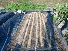 耕作放棄地を剣先スコップで畑に開拓!有機肥料を使い農薬無しで野菜を栽培する週2日の農作業記録 byウッチー-130909極早生たまねぎマッハ種蒔き12
