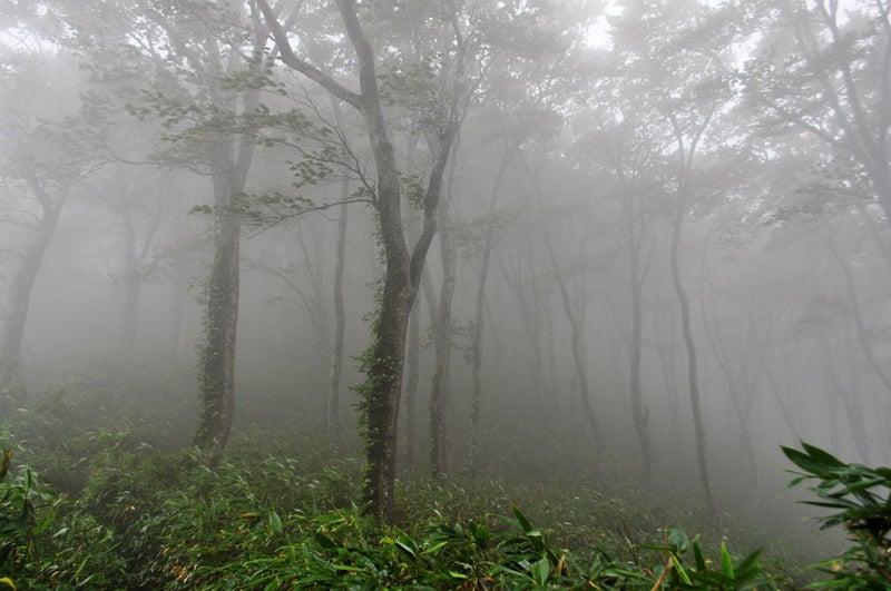 $白神山地ツアーの白神なびスタッフブログ-2013年9月中旬の白神山地の二ツ森8